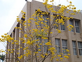 校園是美的:DSC03073.JPG
