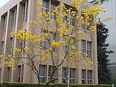 校園是美的:DSC03067.JPG