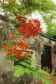 睡不著的鳳凰花:DSC08382.jpg