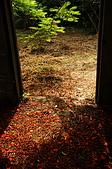 睡不著的鳳凰花:DSC08395.jpg