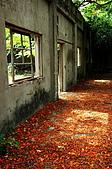 睡不著的鳳凰花:DSC08406.jpg