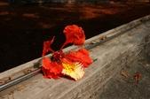 睡不著的鳳凰花之ㄧ篇:DSC08412.jpg