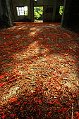 睡不著的鳳凰花:DSC08376.jpg