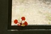 睡不著的鳳凰花之ㄧ篇:DSC08427.jpg