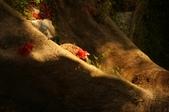 睡不著的鳳凰花之ㄧ篇:DSC08007.JPG