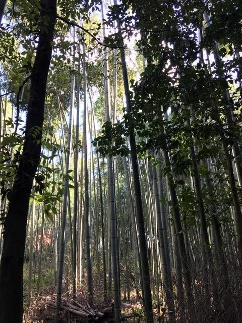 嵐山 (48).JPG - 2016京都大阪Day3