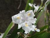 life:很像衛生紙做成的花!!不知道花名是?
