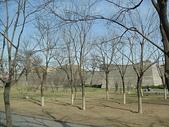 北京day2:DSC02186.JPG