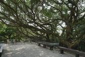 台北:大樹書屋 (4)小.jpg