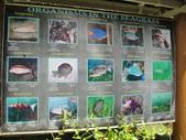 2012帛琉:DSC08980.JPG