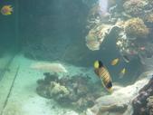2012帛琉:DSC09011.JPG
