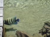 2012帛琉:DSC08926.JPG