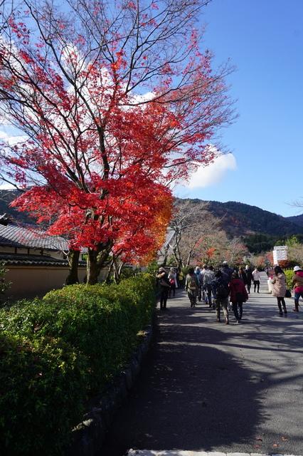 嵐山 (13).JPG - 2016京都大阪Day3