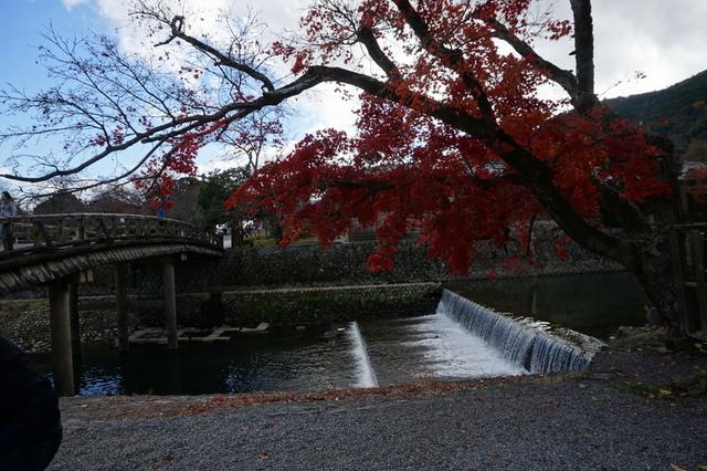 嵐山 (43).JPG - 2016京都大阪Day3