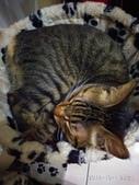 我的寶貝貓咪:IMG_20181001_212317_HHT.jpg