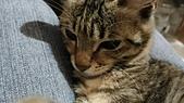 我的寶貝貓咪:1454169937326.jpg