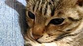 我的寶貝貓咪:1454169928471.jpg