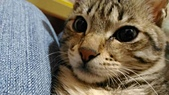 我的寶貝貓咪:1454169931057.jpg
