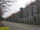 103.04.04觀音東元木棉花:IMG_0043.JPG