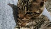 我的寶貝貓咪:1454169939470.jpg