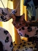 我的寶貝貓咪:IMG_20181006_152323_HHT.jpg