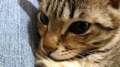我的寶貝貓咪:1454169933053.jpg