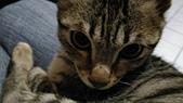 我的寶貝貓咪:1454169941903 (1).jpg