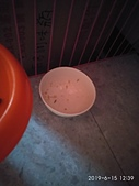 IPET 艾沛海之味貓用主食罐/雞肉:IMG_20190615_123946.jpg