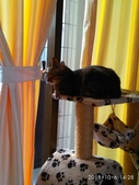 我的寶貝貓咪:IMG_20181006_142847.jpg