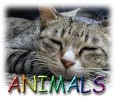 可愛ㄉ寵物:1999245128.jpg