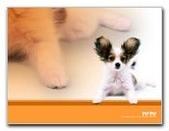 可愛ㄉ寵物:1999245142.jpg