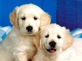可愛ㄉ寵物:1999245143.jpg