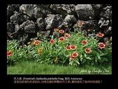 台灣的野花:06.jpg