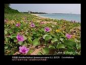 台灣的野花:07.jpg