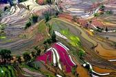 世界各地迷人的風光:中國雲南梯田.jpg
