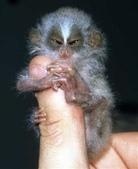 """可愛的""""指猴"""":04.jpg"""