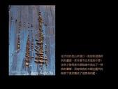 台灣的野花:09.jpg