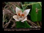 台灣的野花:10.jpg