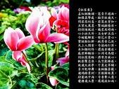 詩情花語:詩情花語20.jpg