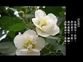 詩情花語:詩情花語09.jpg
