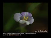 台灣的野花:13.jpg
