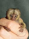"""可愛的""""指猴"""":06.jpg"""