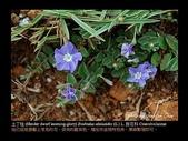 台灣的野花:15.jpg
