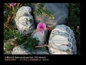 台灣的野花:17.jpg