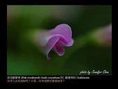 台灣的野花:18.jpg