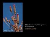 台灣的野花:19.jpg