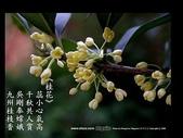 詩情花語:詩情花語06.jpg
