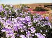世界十大迷人沙漠:9、鮮花盛開的沙漠:智利的阿他加馬沙漠
