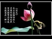 詩情花語:詩情花語03.jpg