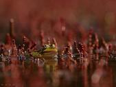 自然之美:自然之美09.jpg